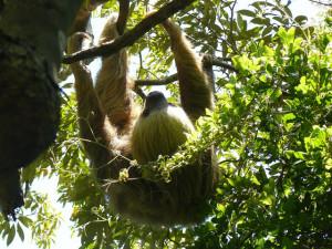 Perezoso (Costa Rica)