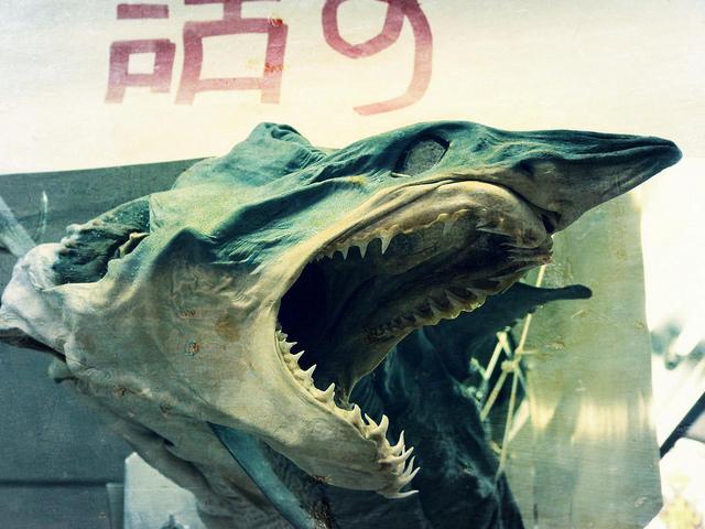 523e77ca14 El instante viajero (VIII): Tiburón en el mercado central de Valencia - El  rincón de Sele