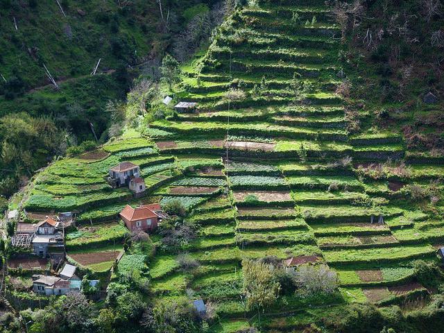 Carta desde Madeira, el paraíso templado