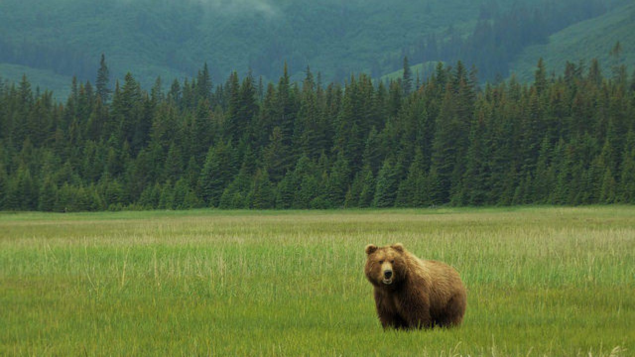 60 Consejos útiles Para Viajar A Alaska En Autocaravana El Rincón De Sele